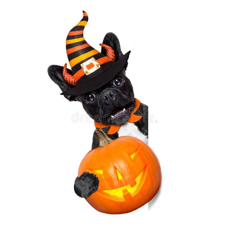Bandera del perro de Halloween fotografía de archivo libre de regalías