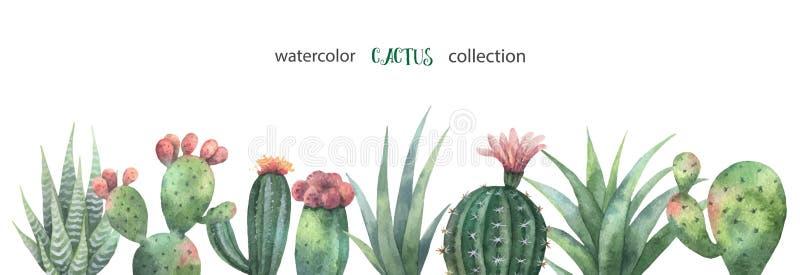 Bandera del vector de la acuarela de los cactus y de las plantas suculentas aislados en el fondo blanco ilustración del vector