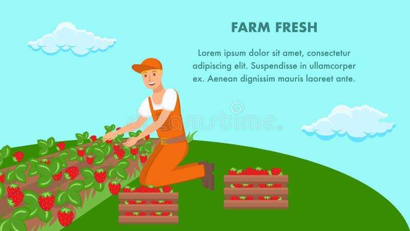 Bandera del vector de Planting Strawberry Sprouts del granjero stock de ilustración