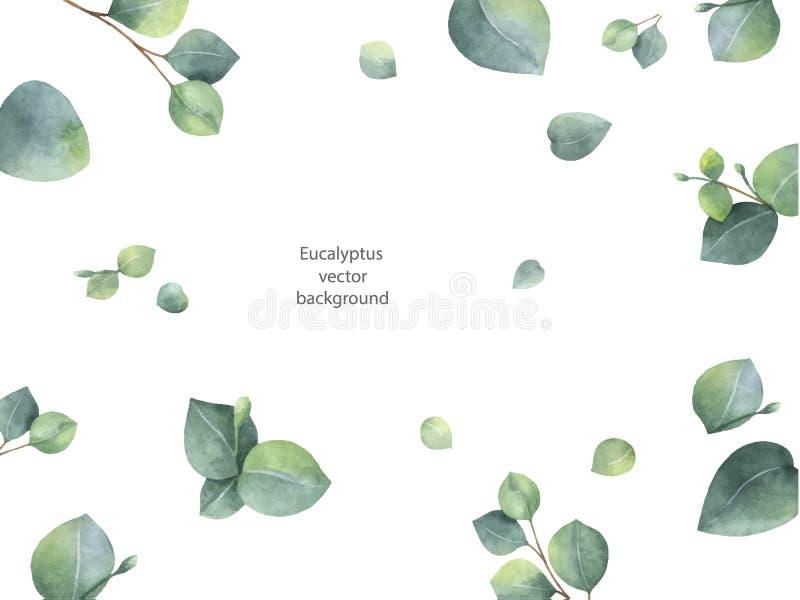 Bandera floral del verde del vector de la acuarela con las hojas y las ramas del eucalipto del dólar de plata aisladas en el fond libre illustration
