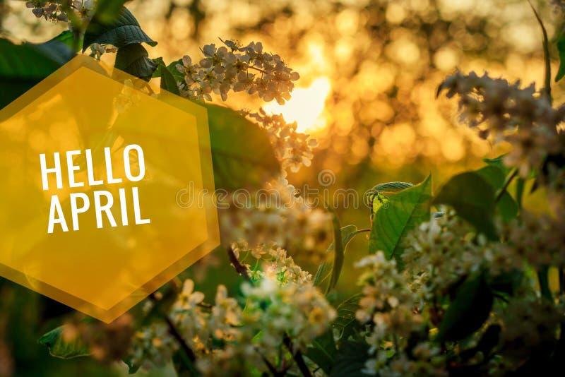 Bandera hola abril Hola primavera Hola abril La tarjeta agradable estamos esperando el nuevo mes de la primavera El segundo mes d imagen de archivo
