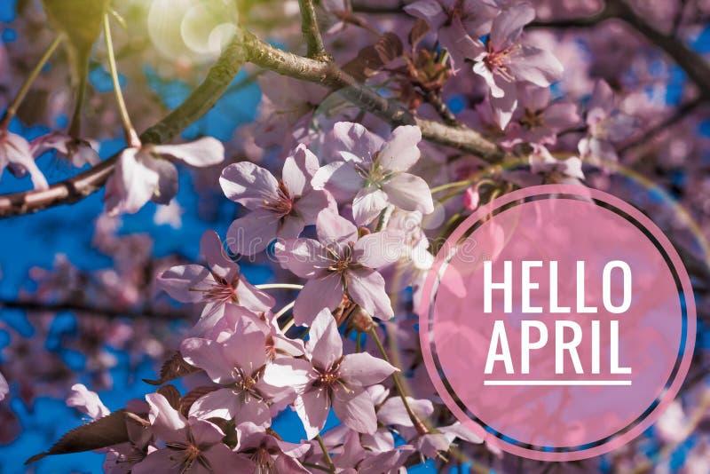 Bandera hola abril Hola primavera Hola abril La tarjeta agradable estamos esperando el nuevo mes de la primavera El segundo mes d fotos de archivo