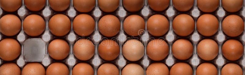 Bandera horizontal con filas rectas de los huevos marrones del pollo en un envase y un espacio libre imagen de archivo libre de regalías