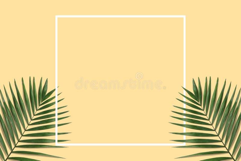 Bandera mínima del verano con el marco blanco Hojas de palma verdes ilustración del vector