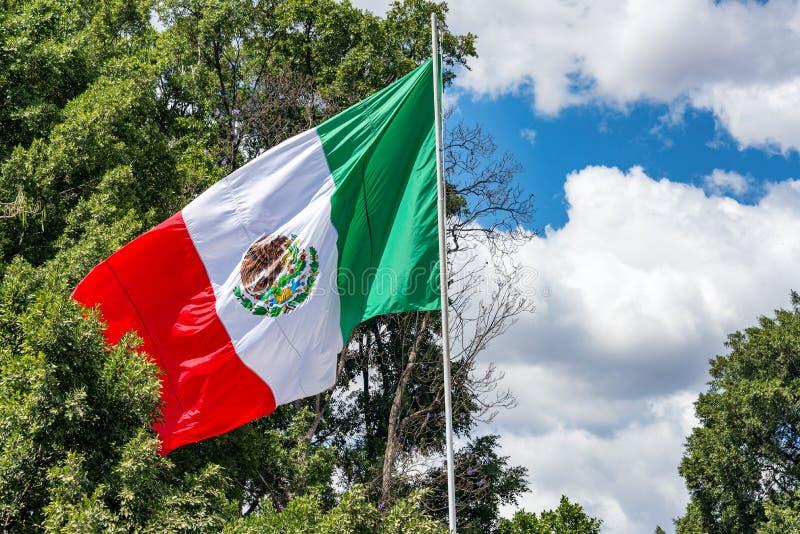 Bandera mexicana y árboles imagen de archivo libre de regalías