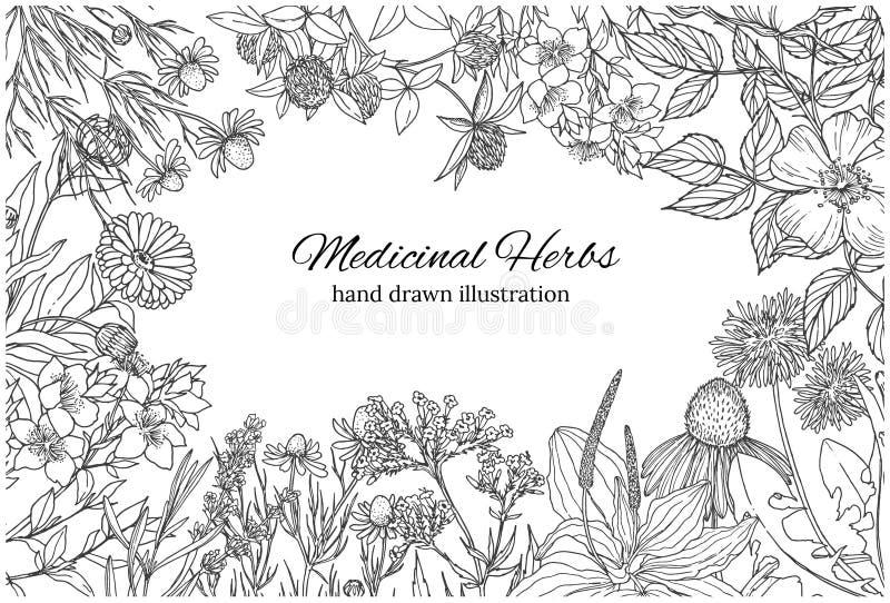 Bandera monocromática horizontal con las flores y las hierbas medicinales en blanco stock de ilustración