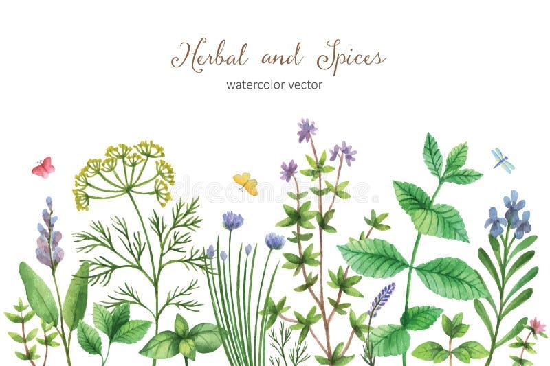 Bandera pintada a mano del vector de la acuarela con las hierbas y las especias salvajes libre illustration