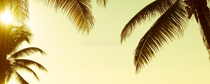 Bandera tropical del vintage de Palmtree foto de archivo libre de regalías