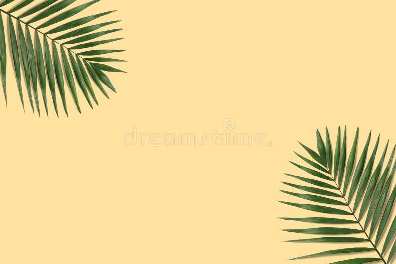 Bandera tropical mínima del verano Hoja de palma verde fotos de archivo libres de regalías