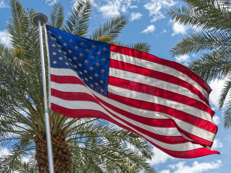 Bandera y palmeras de Estados Unidos foto de archivo libre de regalías