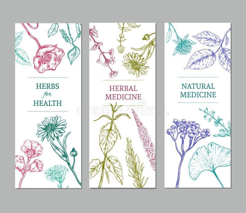Banderas verticales herbarias del bosquejo libre illustration