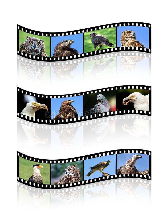 Bandes de film illustration stock