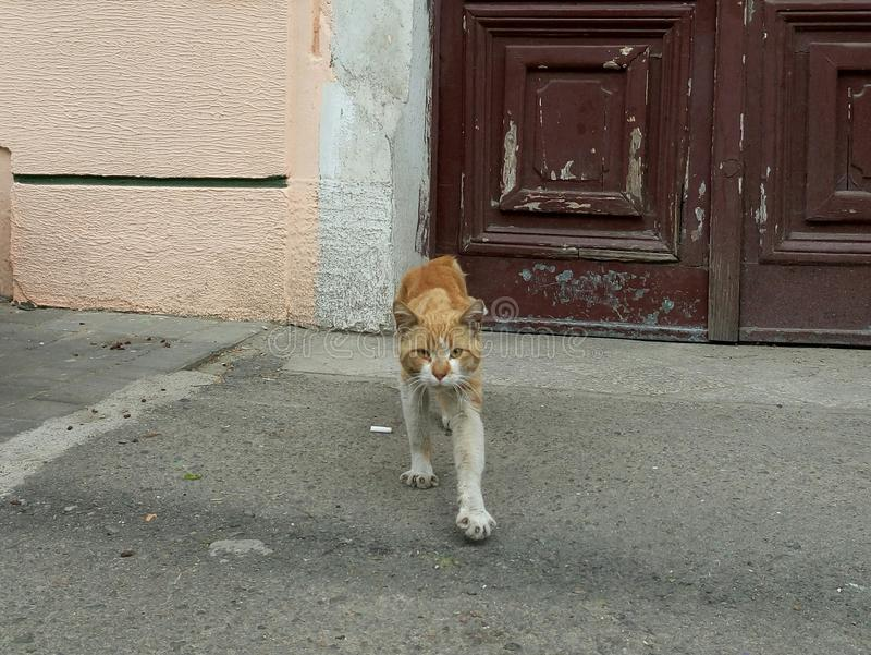 Bandido do gato fotografia de stock