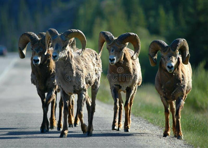 Bandidos da estrada imagem de stock royalty free