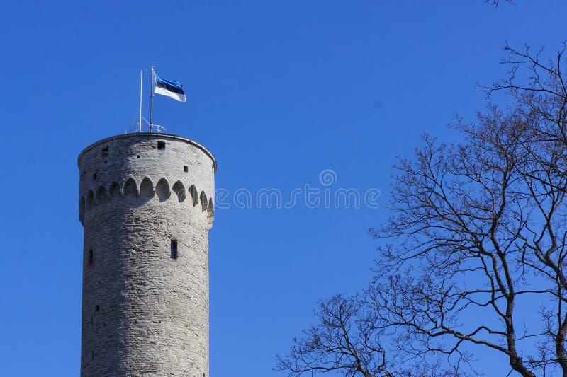 Bandiera dell'Estonia che ondeggia sopra la vecchia torre storica massiccia a Tallinn (Estonia) con un'asta della bandiera fotografia stock