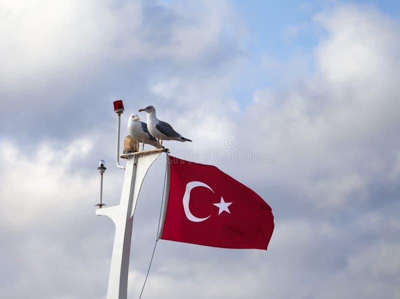 Bandiera di due gabbiano e del turco sull'albero immagine stock