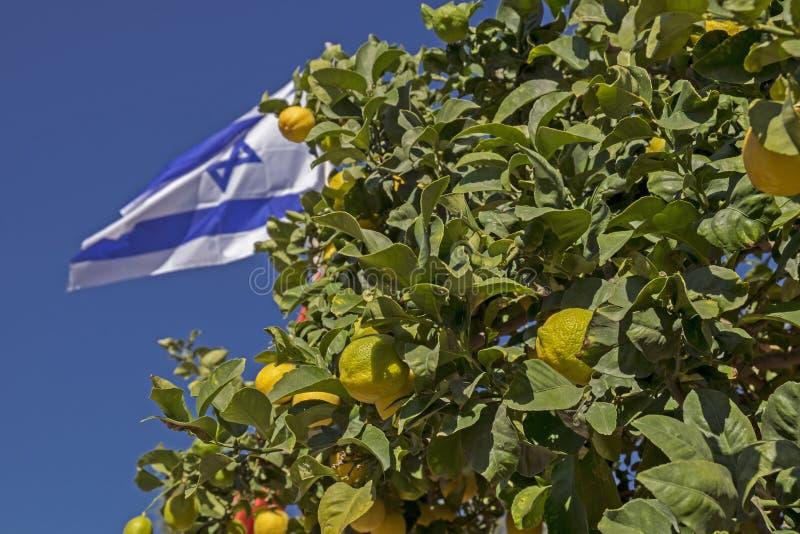 Bandiera israeliana sul fondo del cielo blu e sull'albero di limoni immagini stock libere da diritti