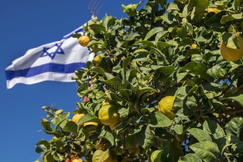 Bandiera israeliana sul fondo del cielo blu e sull'albero di limoni fotografia stock