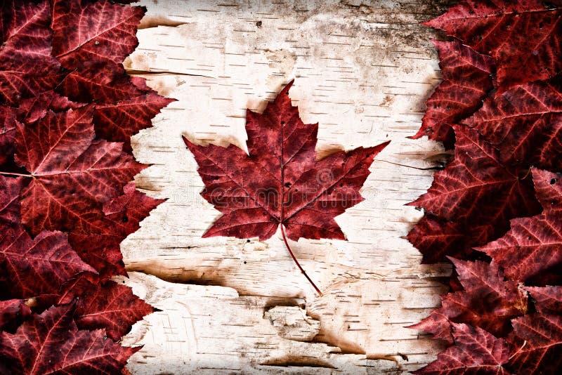 Bandiera reale del Canada della foglia sulla corteccia di betulla fotografie stock