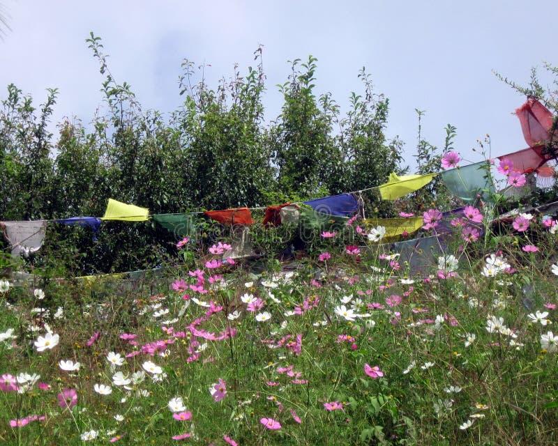 Bandiere buddisti tibetane di preghiera nel giacimento di fiore immagini stock