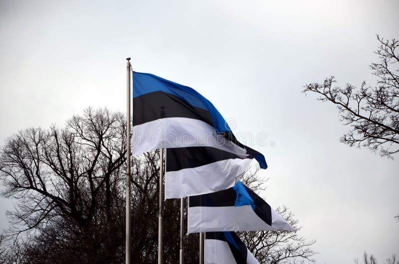 Bandiere dell'Estonia immagini stock