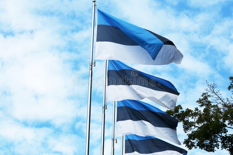 Bandiere dell'Estonia Tallinn, Estonia Nirdic, baltico fotografie stock libere da diritti