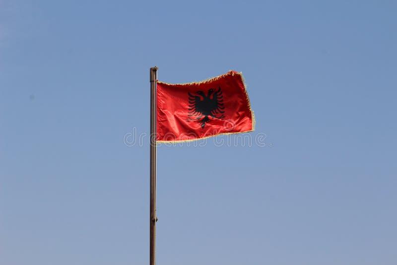 Bandierina albanese fotografia stock libera da diritti