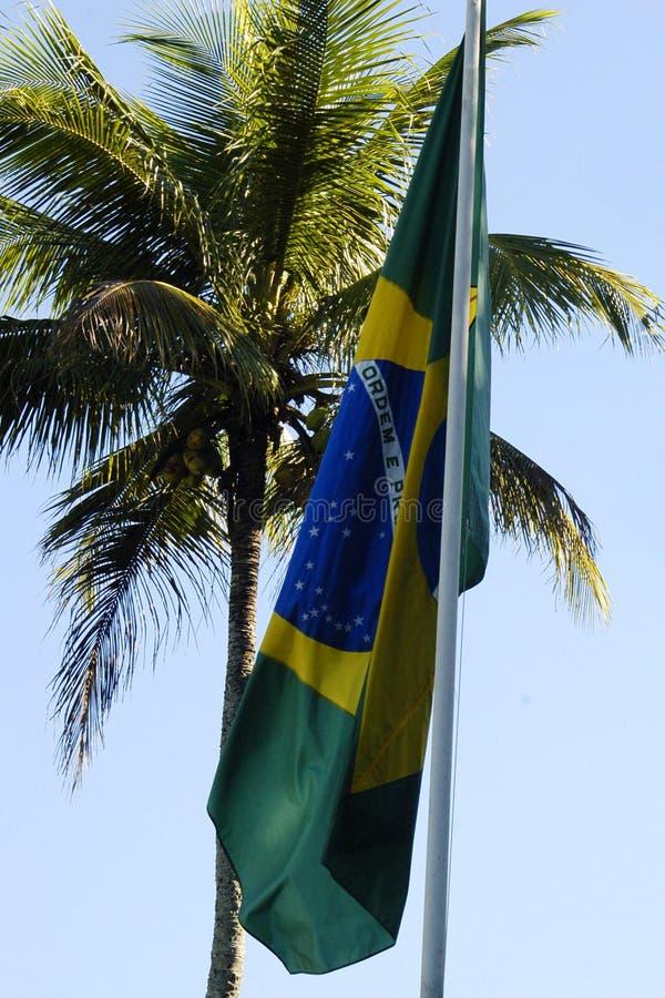 Bandierina brasiliana e una palma fotografia stock