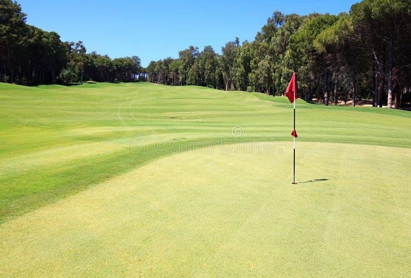 Bandierina sul terreno da golf. immagini stock libere da diritti