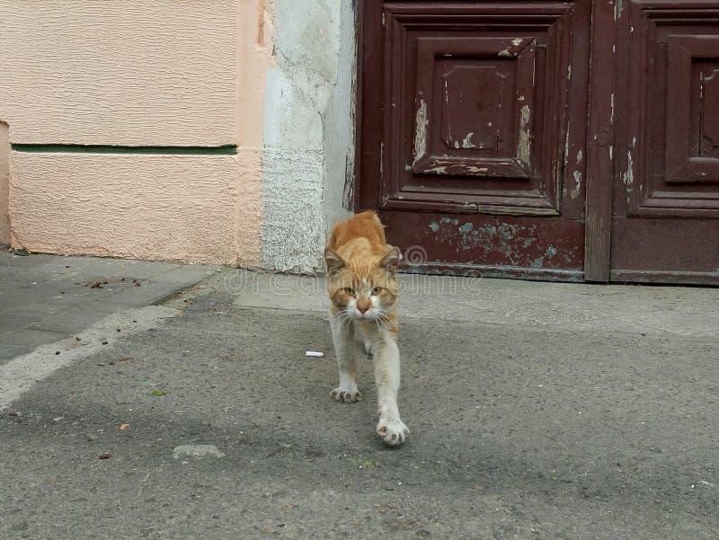 Bandit de chat photographie stock