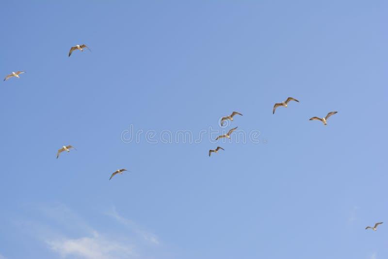 Bando de gaivotas no céu fotos de stock