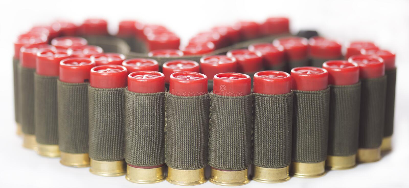 Bandoliera torta con le cartucce rosse del fucile da caccia isolate fotografia stock