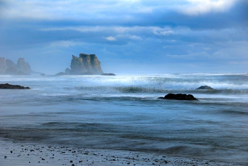 Bandon Beach Seagull royalty free stock images