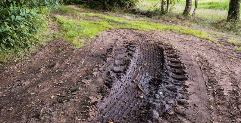 Bandsporen in de modder van een bosrand stock afbeelding