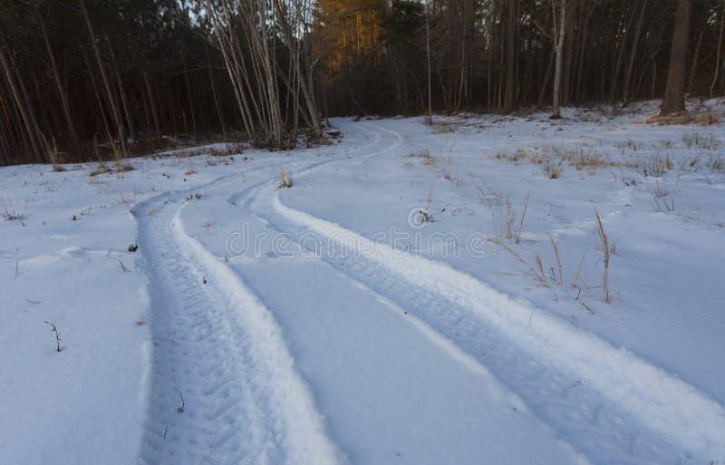 Bandsporen in sneeuwhout stock foto's