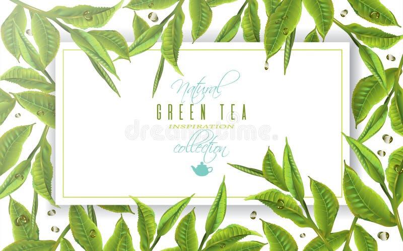 Baner för grönt te stock illustrationer