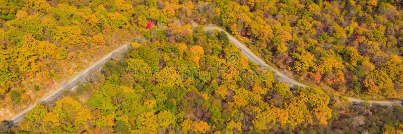 BANER flyg- sikt för LÅNGT FORMAT av vägen i härlig höstskog på solnedgången Härligt landskap med den tomma lantliga vägen arkivfoton