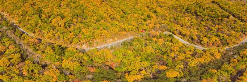 BANER flyg- sikt för LÅNGT FORMAT av vägen i härlig höstskog på solnedgången Härligt landskap med den tomma lantliga vägen royaltyfria bilder