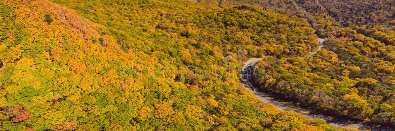 BANER flyg- sikt för LÅNGT FORMAT av vägen i härlig höstskog på solnedgången Härligt landskap med den tomma lantliga vägen royaltyfria foton