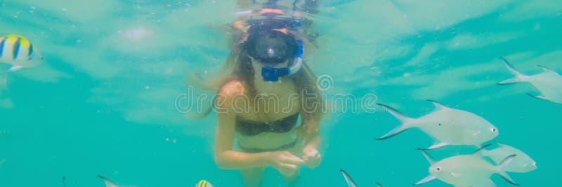 BANER lycklig kvinna för LÅNGT FORMAT, i att snorkla maskeringsdyken som är undervattens- med tropiska fiskar i pöl för hav för k arkivfoton