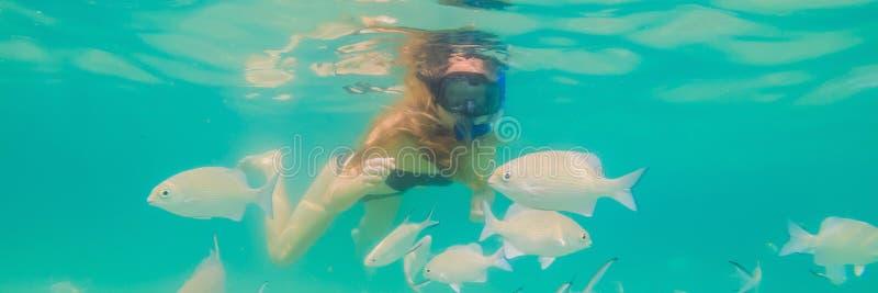 BANER lycklig kvinna för LÅNGT FORMAT, i att snorkla maskeringsdyken som är undervattens- med tropiska fiskar i pöl för hav för k royaltyfri fotografi