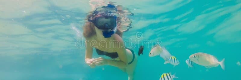 BANER lycklig kvinna för LÅNGT FORMAT, i att snorkla maskeringsdyken som är undervattens- med tropiska fiskar i pöl för hav för k arkivbilder