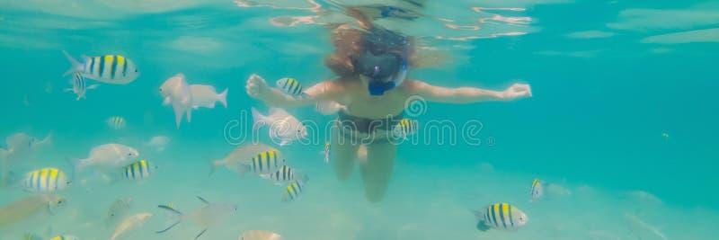 BANER lycklig kvinna för LÅNGT FORMAT, i att snorkla maskeringsdyken som är undervattens- med tropiska fiskar i pöl för hav för k royaltyfri bild