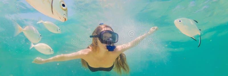 BANER lycklig kvinna för LÅNGT FORMAT, i att snorkla maskeringsdyken som är undervattens- med tropiska fiskar i pöl för hav för k arkivfoto