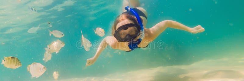 BANER lycklig kvinna för LÅNGT FORMAT, i att snorkla maskeringsdyken som är undervattens- med tropiska fiskar i pöl för hav för k royaltyfria bilder