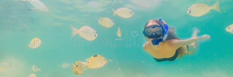 BANER lycklig kvinna för LÅNGT FORMAT, i att snorkla maskeringsdyken som är undervattens- med tropiska fiskar i pöl för hav för k royaltyfria foton