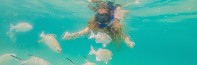BANER lycklig kvinna för LÅNGT FORMAT, i att snorkla maskeringsdyken som är undervattens- med tropiska fiskar i pöl för hav för k fotografering för bildbyråer