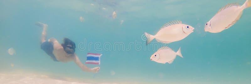 BANER lycklig man för LÅNGT FORMAT, i att snorkla maskeringsdyken som är undervattens- med tropiska fiskar med den Thailand flagg fotografering för bildbyråer