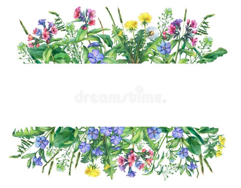 Baner med lösa ängblommor och gräs som isoleras på vit bakgrund royaltyfri illustrationer