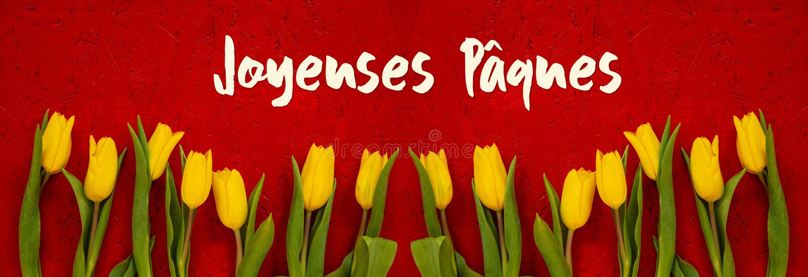 Baner Of Yellow Tulip Flowers, Red Background, Jaqeuses Paques Mean Happy Easter stock image